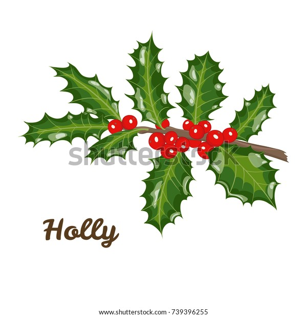 Christmas Branch Vector.Christmas Branch Holly Leaves Berries Vector Stock Vector