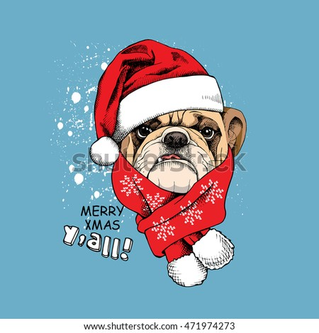 a40c9b63dcd Christmas card. Portrait of a Bulldog in Santa s cap and red scarf on a blue