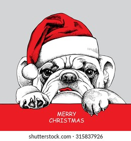 982d80f2cb2 Christmas card. Poster of portrait bulldog in a Santa s hat. Vector  illustration.