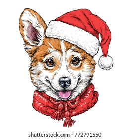 Christmas card with Puppy Pembroke Welsh corgi portrait in red Santa's hat and scarf. Vector illustration