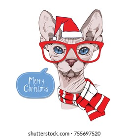 Christmas card. Sphynx Cat in a red Santa cap, glasses and in a striped scarf. Vector illustration.