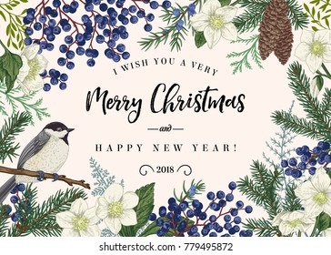 Christmas card with winter plants and a bird. Spruce, cones, juniper, flowers of hellebore, titmouse. Botanical illustration. Vector background.
