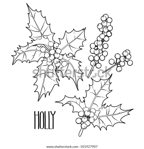 Xmas Holly coloring page | Free Printable Coloring Pages | 620x600