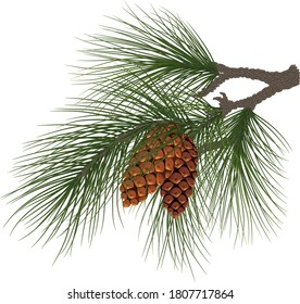 Christmas composition. Fir tree branch with cones. Green pine branch close-up. Christmas tree branches. Pine tree. Eps10