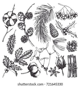 Christmas elements collection. Vintage set of hand drawn conifers, winter berries, cotton and traditional holidays plants sketch. Winter illustrations. Vector outlines.