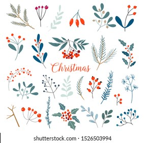 Christmas floral collection with winter decorative plants and flowers. Cute hand drawn in scandinavian style. Illustration of winter berries and Christmas tree branches.