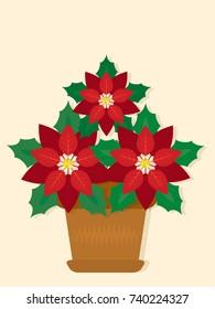 Christmas flower,poinsettia