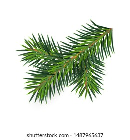 Christmas green lush spruce branch. Fir-tree New Year branch. Vector illustration element of design isolated on white