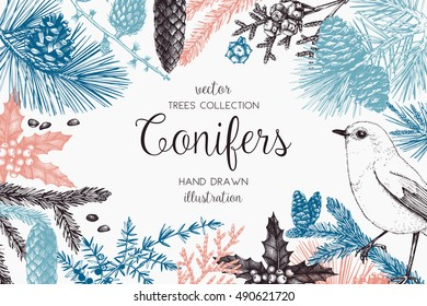 Christmas greeting card or invitation design. Vector frame with hand drawn conifers sketch. Vintage background with pine, spruce, cedar, cypress, fir, larch and juniper illustration.