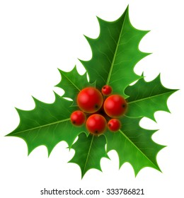 Christmas holly berry isolated on white background. Holly fruits bunch with leaves. Vector illustration for christmas, new year's day, decoration, winter holiday, design, new year's eve, plants, etc