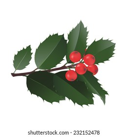 Christmas Holly Hand drawn vector illustration of a small branch of holly with red berries. Design element for Christmas designs on white background, accurate botanical details.