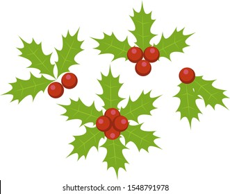 christmas holy berry leafs vector illustration