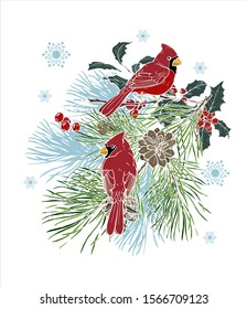 Christmas illustration with cardinals birds on a pine branch, vector