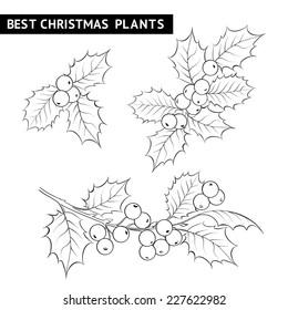 Christmas mistletoe branch pencil drawing. Vector illustration.