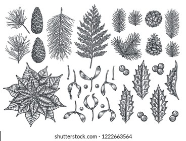 Christmas object set. Hand drawn vintage illustration. Xmas collection. Holiday engraved holly, berry, mistletoe, fir tree, poinsettia, pine cone, thuja and cedar branches.