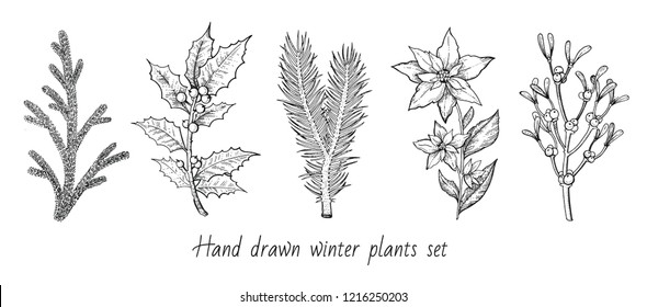 Christmas plant branch set: holly, mistletoe, flower, pine, fir icon. Hand drawn sketch. Merry xmas black white ink line art. Winter holiday decoration vector ilustration isolated on white background