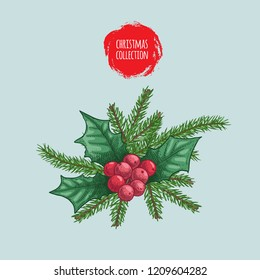 Christmas plants bouquet. Holly berries and fir tree branches. Holiday decoration element. Hand drawn sketch style. Colorful artwork. Isolated on light blue background. Vector illustration.