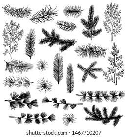 Christmas plants set. Vector hand-drawn illustration.