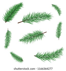 Christmas set of fir branches for poster, banner, card. Vector elements on white background. 2019 new year