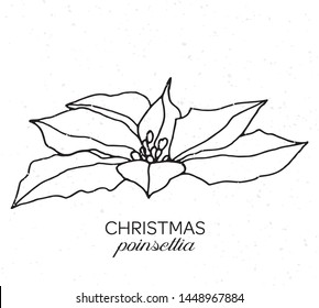 Christmas traditional Poinsettia hand drawn vector illustration with textured background. Christmas poinsettia flower in linear style. Design element for poligraphy, cards, quotes, posters.