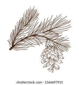 Christmas tree branch with a cone. Vector black and white linear graphics.