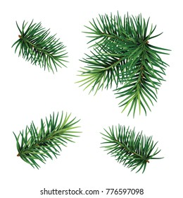 Christmas tree branch set. Hand painted Christmas fir branch  isolated on white background. Botanical illustration. Holiday print for design.
