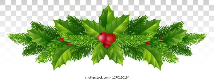 Christmas tree , holly, fir and pine branches with red berry, Winter holiday decoration, New Year label design. on a transparent background. Vector illustration. Eps 10.
