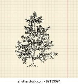 Christmas tree sketch on school paper, vector illustration, eps 10