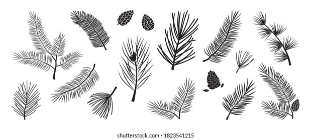 Christmas tree vector branches, fir and pine cones, evergreen set, holiday decoration, black winter symbols isolated on white background. Nature illustration