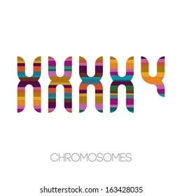 Chromosomes, vector illustration