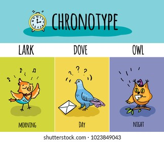 Chronotype of people. Biorhythm. Lark, pigeon, owl. Day and night activity.