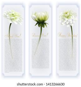 Chrysanthemum flowers, isolated on white background