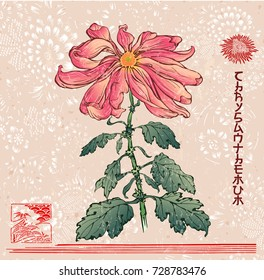 Chrysanthemum. Title written in japanese style font. Vector illustration of chrysanthemum flower in the style of chinese and japanese prints with asian floral symbolic background and decorations.