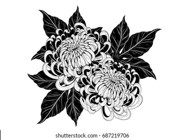 Chrysanthemum vector on white background. Chrysanthemum flower by hand drawing. Flower tattoo black and white concept. Floral tattoo highly detailed in line art style.