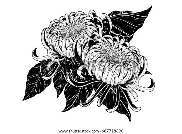 Image Vectorielle De Stock De Chrysanthèmes Image