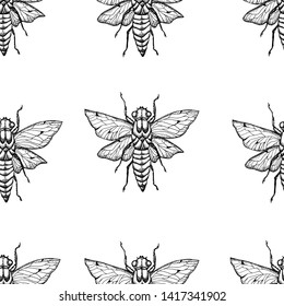 Cicada ,Bee ,Beetle .Vector background with hand drawn insects illustrations.  Entomological seamless pattern.
