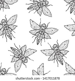 Cicada ,Bee.Vector background with hand drawn insects illustrations.  Entomological seamless pattern.
