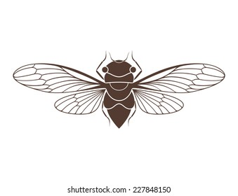 Cicada. Isolated insect on white background. Vector illustration