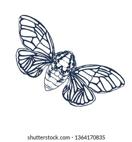 Cicada isolated on white background,vector illustration hand drawing