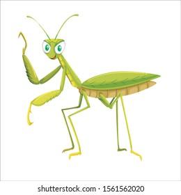 cicada on a white background