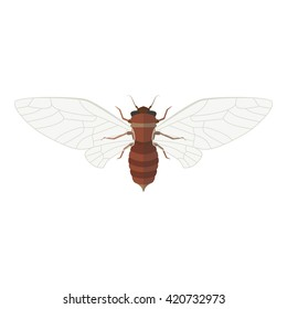 Cicada vector illustration. Isolated insect with open wings on white background