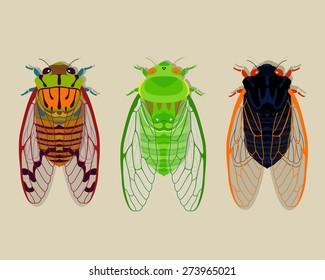 Cicadas collection part 2