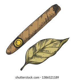 Cigar and tobacco leaf color sketch engraving vector illustration. Scratch board style imitation. Black and white hand drawn image.