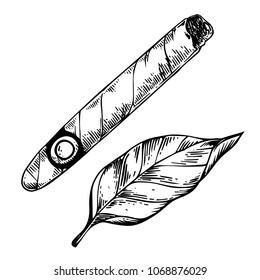 Cigar and tobacco leaf engraving vector illustration. Scratch board style imitation. Black and white hand drawn image.