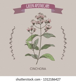 Cinchona officinalis aka quinine or Jesuit bark color sketch. Green apothecary series. Great for traditional medicine, or gardening.