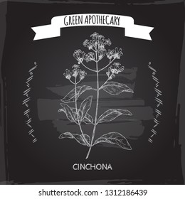 Cinchona officinalis aka quinine or Jesuit bark sketch on black. Green apothecary series. Great for traditional medicine, or gardening.