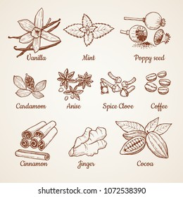 Cinnamon, chocolate, lemon and other kitchen herbs. Hand drawn illustrations