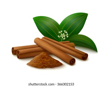 Cinnamon sticks, powder, leaves and flower with shadows isolated on white background. Vector illustration.