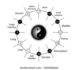 Circadian clock of the main meridians of the body according to Chinese medicine - 24 hours. Yin yang indicator : white is yin whereas black is yang. Rhythms of the organs of human body on 24 hours