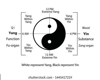 Circadian clock of the main meridians of the body according to Chinese medicine - 12 hours. Yin yang indicator : white is yin whereas black is yang. Rhythms of the organs of human body on 12 hours